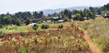 50×100 Plots in Gichungo B Ndeiya